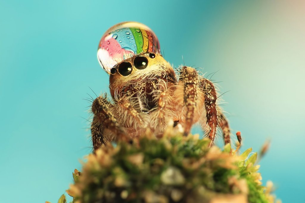 uda_dennie_spider_hat_01