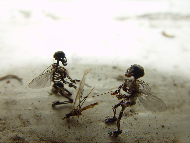 tessa farmer's hell raising fairies | onelargeprawn, Skeleton