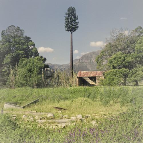 Invasive Species, Paarl (2009)