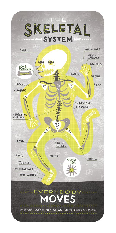 skeletal_system_ignotofsky