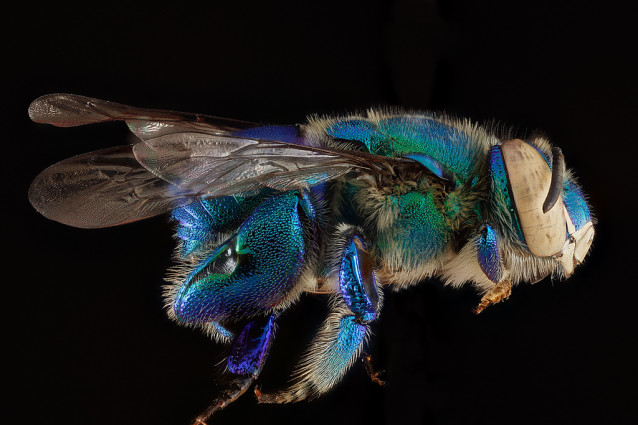 USGS_bees_01
