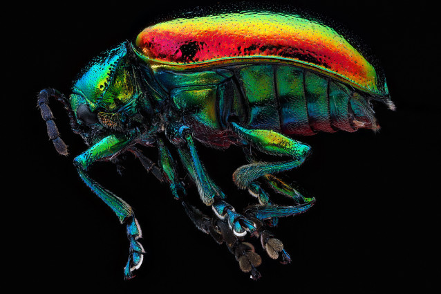 USGS_bees_02