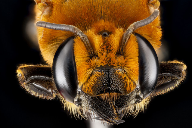 USGS_bees_05