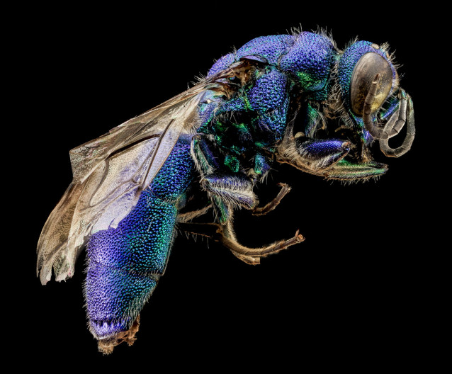 USGS_bees_06