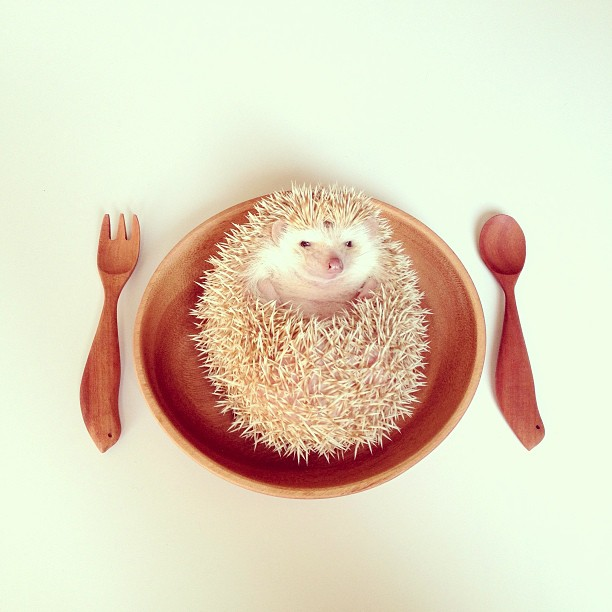 Darcy_hedgehog_02
