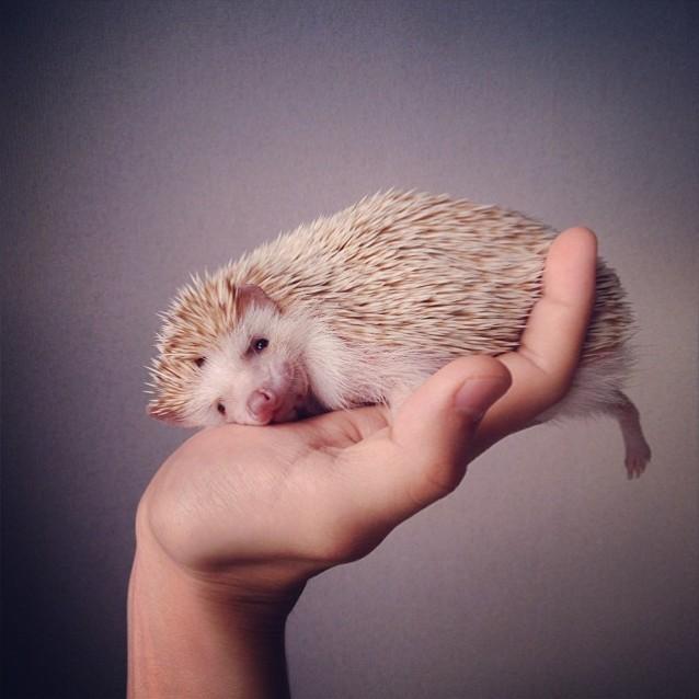 Darcy_hedgehog_05