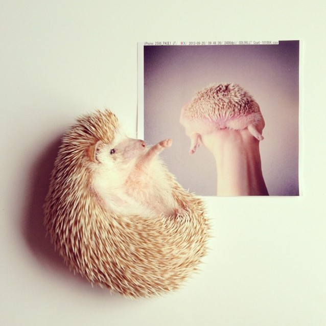 Darcy_hedgehog_06