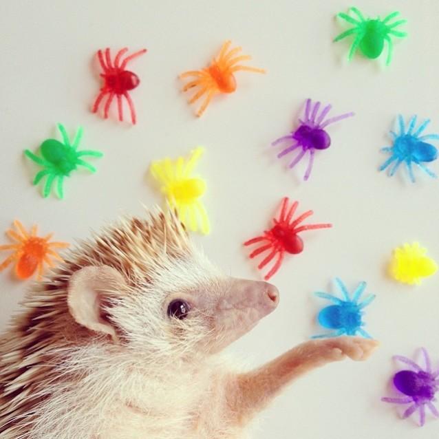 Darcy_hedgehog_07