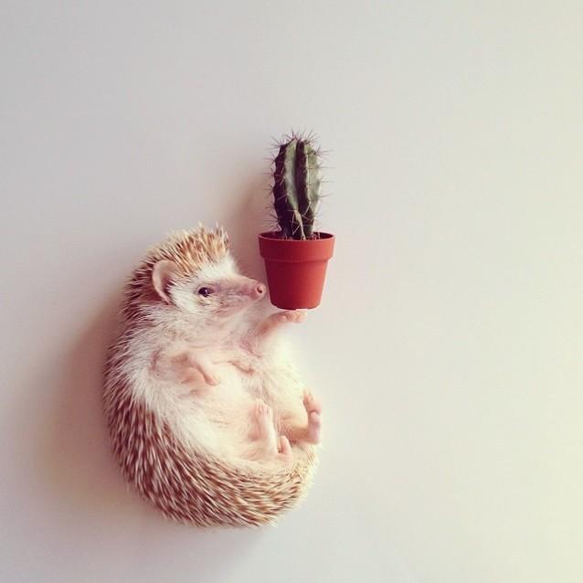 Darcy_hedgehog_09